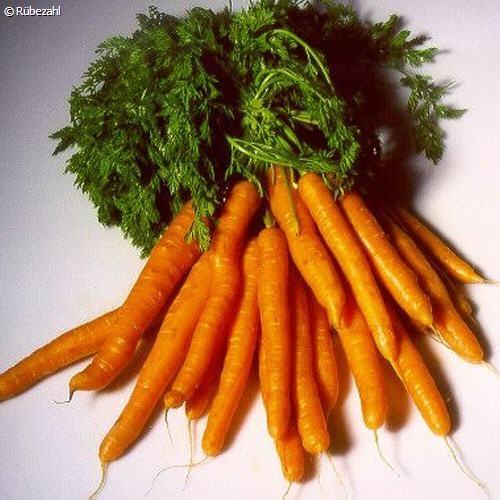 Karottensamen Öl (daucus carota)