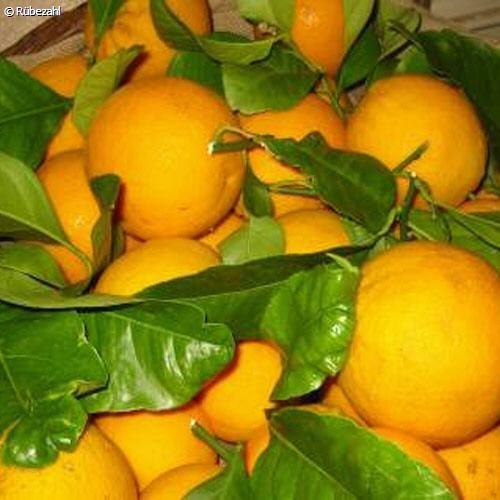 Blutorange Öl (citrus sinensis)