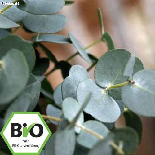 Eukalyptus glob. BIO Öl (eucalyptus globulu)