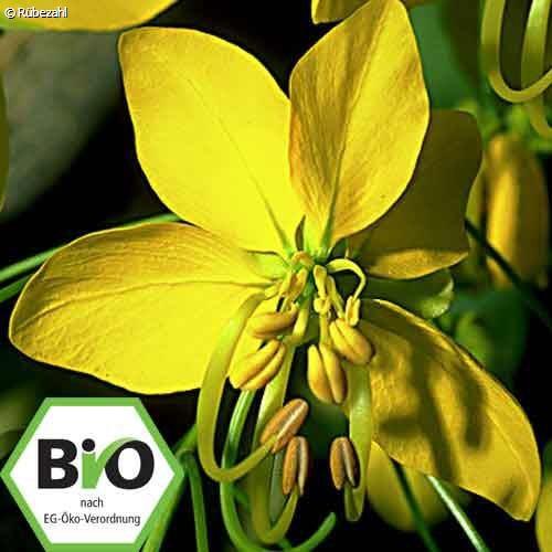 Cassia BIO Öl (cinnamomum aromaticum)