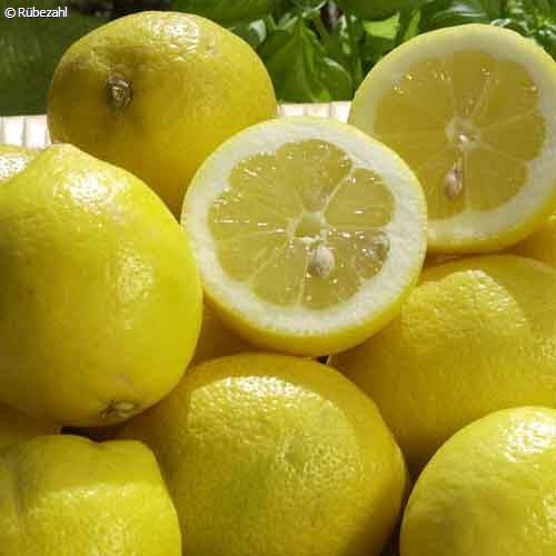 Citrone Öl (citrus limon)