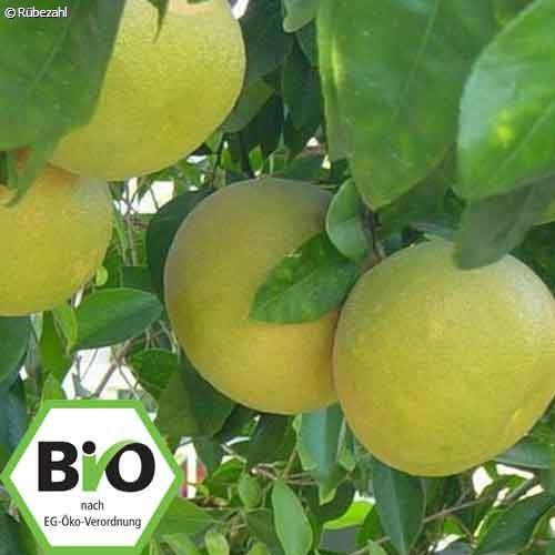 Grapefruit BIO Öl (citrus paradisi)