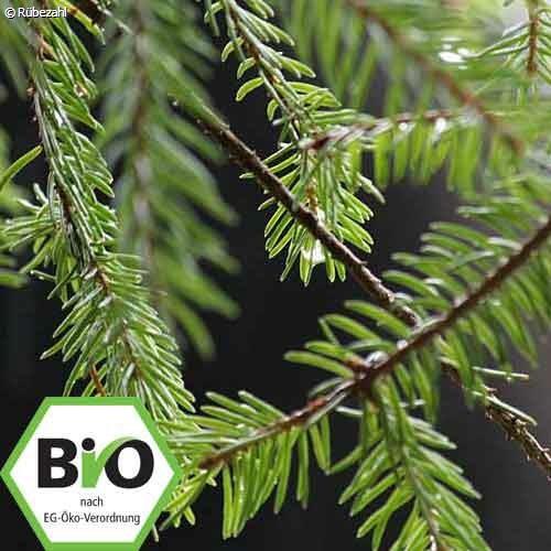 Kiefernnadel BIO Öl (pinus sylvestris)