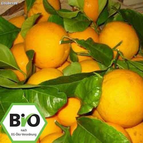 Blutorange BIO Öl (citrus sinensis)