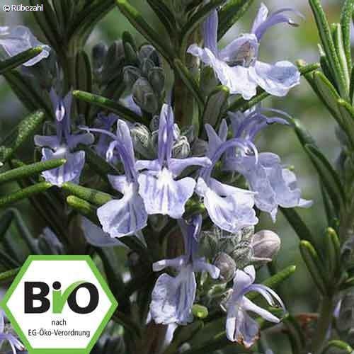 Rosmarin BIO Öl (rosmarinus officinalis)