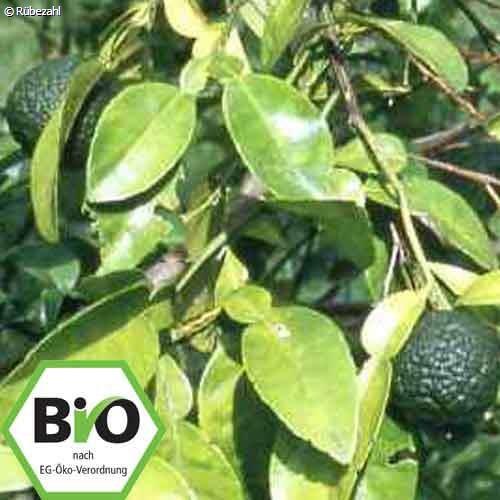 Petit Grain BIO Öl (citrus aurantium)