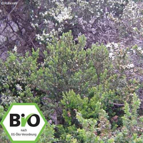 Teebaum BIO Öl (melaleuca alternifolia)