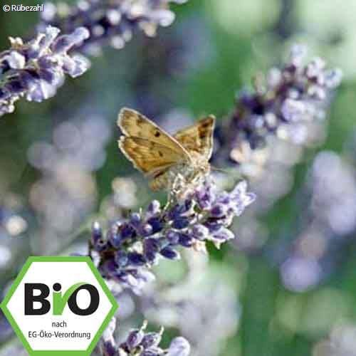 Lavendel trad. BIO Öl (lavand. angustifolia)