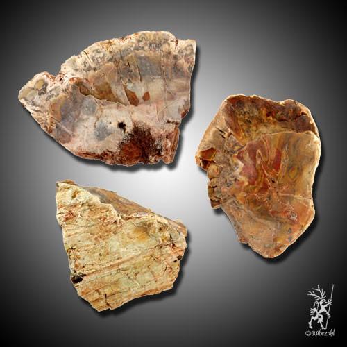 VERSTEINERTES HOLZ geologisch