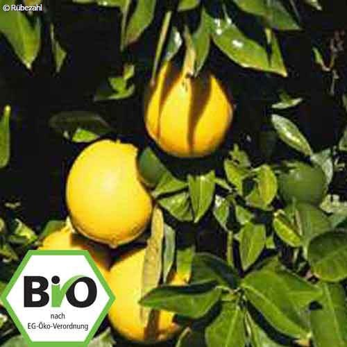 Orange süss BIO Öl (citrus sinensis)