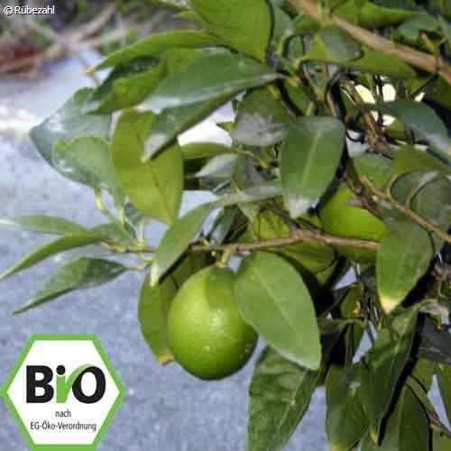 Mandarine grün BIO Öl (citrus reticulata)