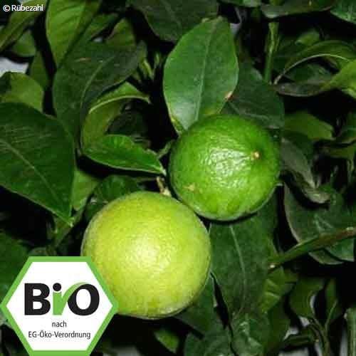 Bergamotte BIO Öl (citrus bergamia)