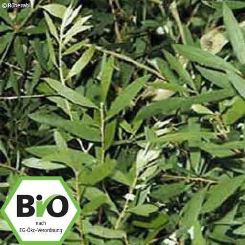 Niaouli BIO Öl (malaleuca virdiflora)
