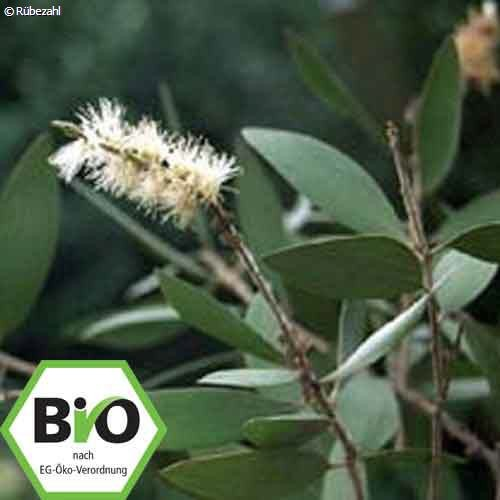 Cajeput BIO Öl (malaleuca leucadendron)