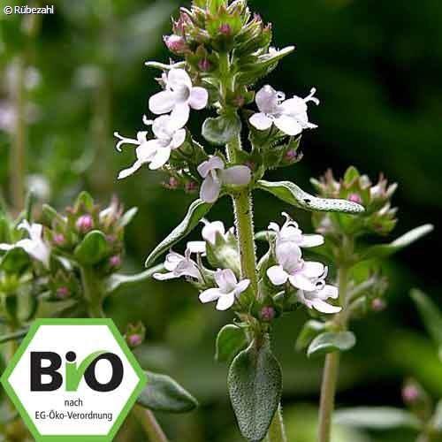 Thymian BIO Öl (thymus vulgaris)